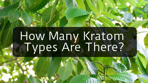 How Many Types Of Kratom Are There? – Kratomexchange