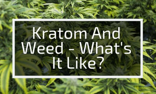 Using Kratom And Marijuana Together