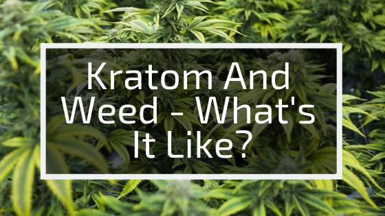 Using Kratom And Weed: Effects, Experiences, Safety And More